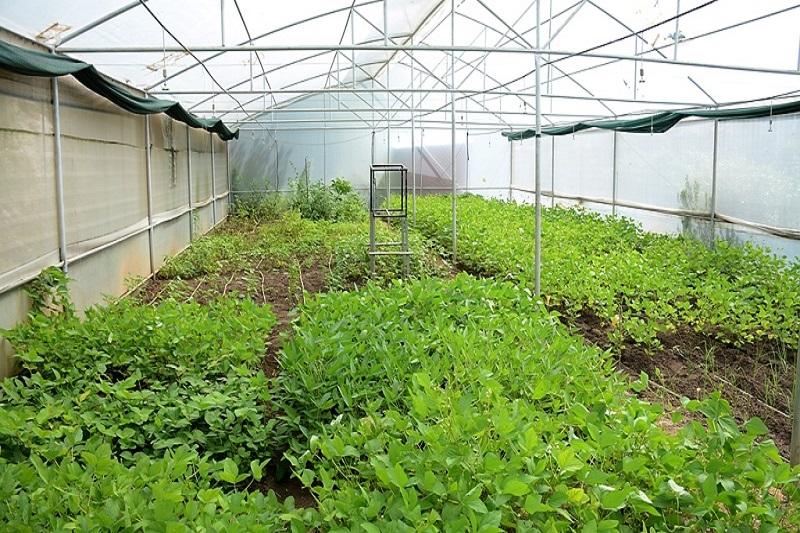 green house4